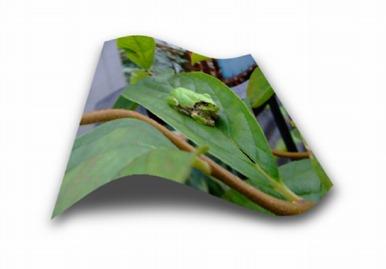 frogshadow01